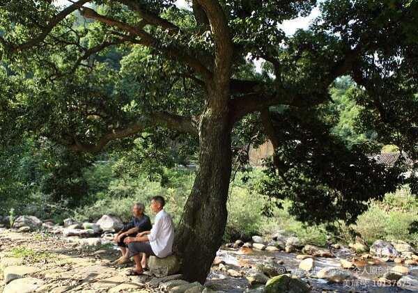 初秋梧桐树下的老王头 - 胡萝卜 - 大漠孤烟
