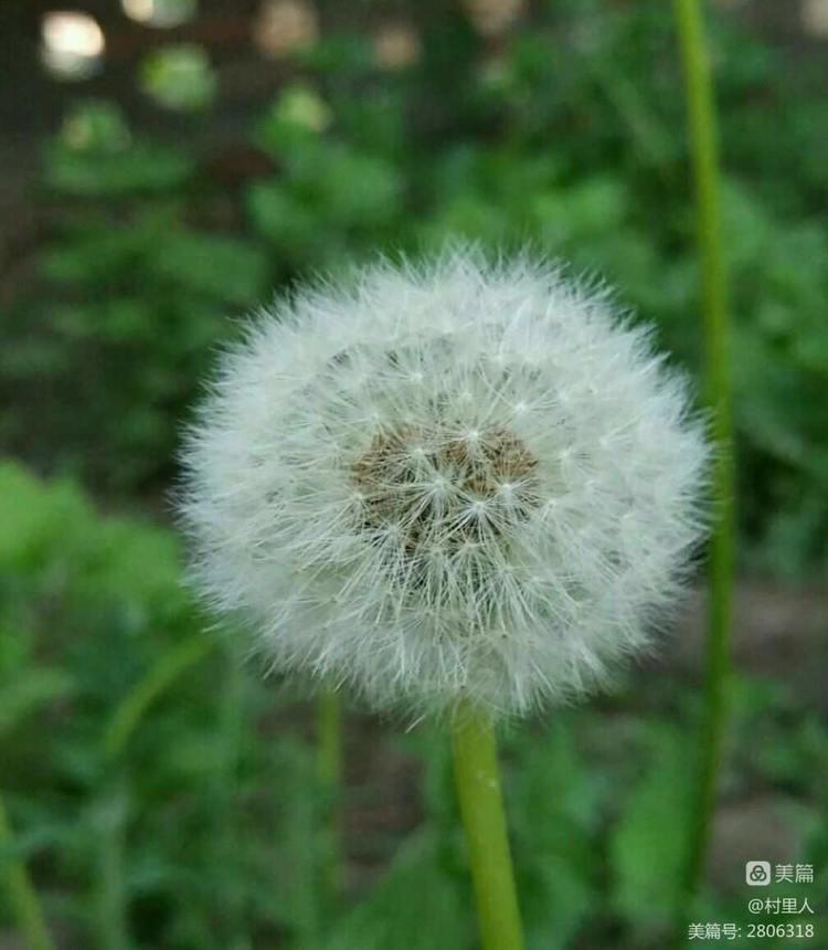 我是一粒种子, 渴望长出奇迹! - 印有三美 - 印有三美的博客