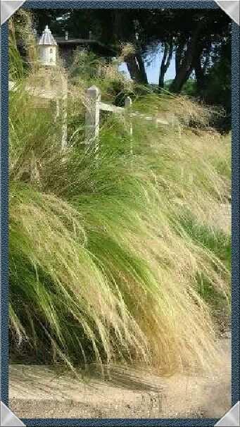 這样的野草, 真的是悲哀! - 印有三美 - 印有三美的博客