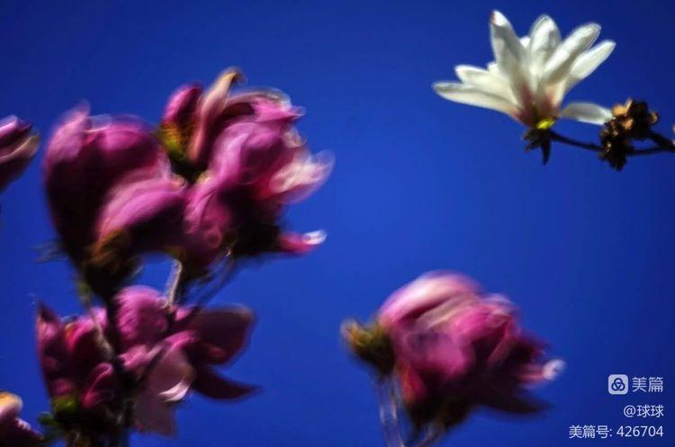《春风里,有一个镜头叫折返~杨琳》——xiaolin - 826专列列车长 - 开往扎鲁特草原的826专列
