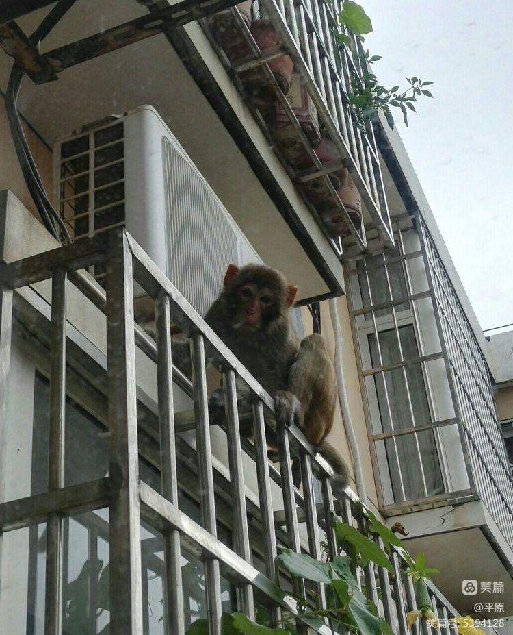 小区人猴故事之二 - 天天 - 天天的博客