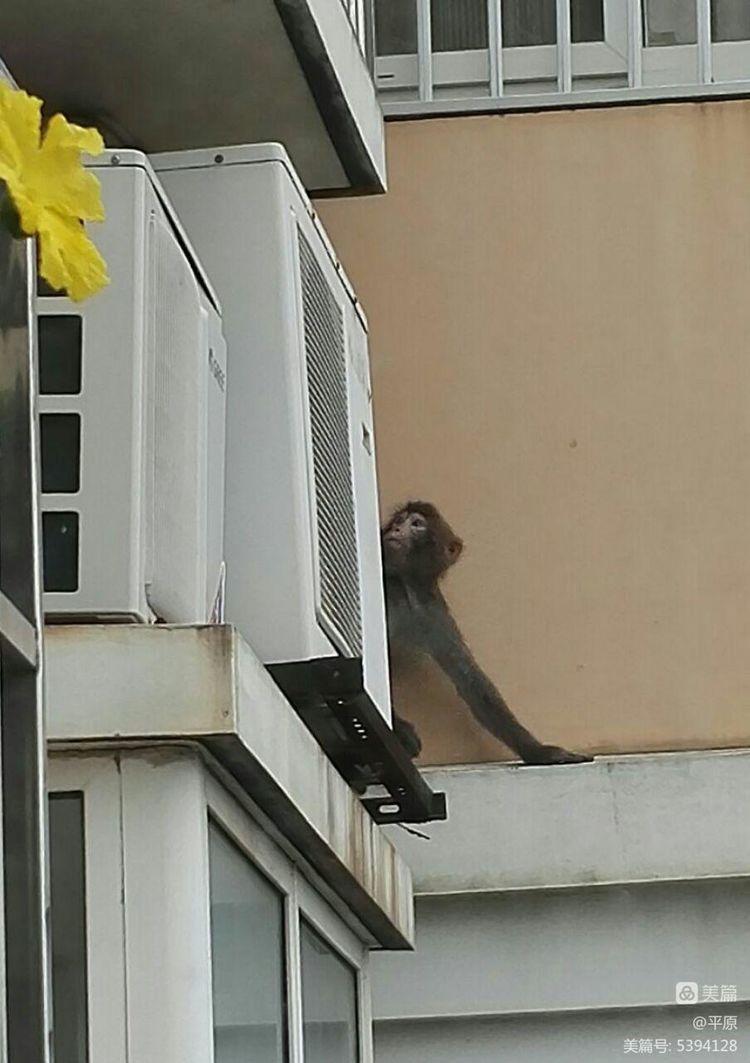 猴子进我家,造反了,不走了! - 天天 - 天天的博客