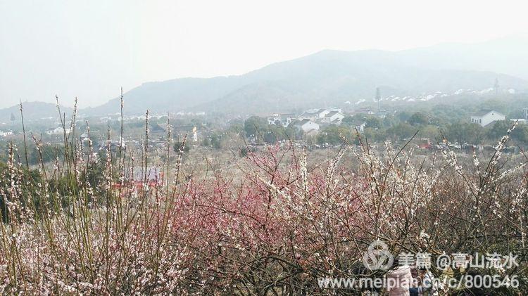 【原创】香雪海十里梅花十里笑 - 秋香 - 方人雨